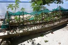 mangroves-manus-repicore