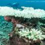 Bleaching in Fiji