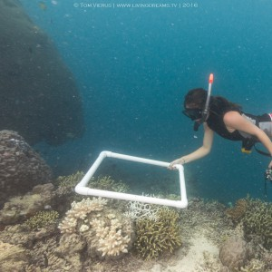 Me (Amanda) undertaking photo-quadrat resurveys on snorkel