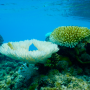 Coral bleaching in the Aitutaki Lagoon 2016/2017